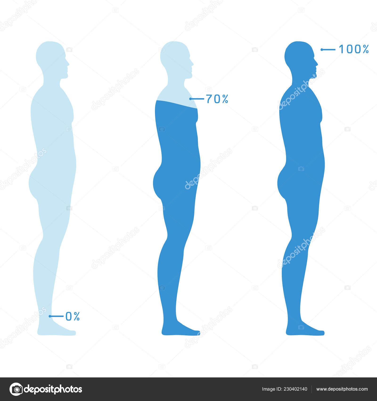 Infographic Visualizzando Nel Livello Percentuale Acqua Nel Corpo