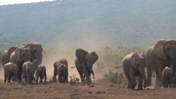 Video of Amazing group elephants