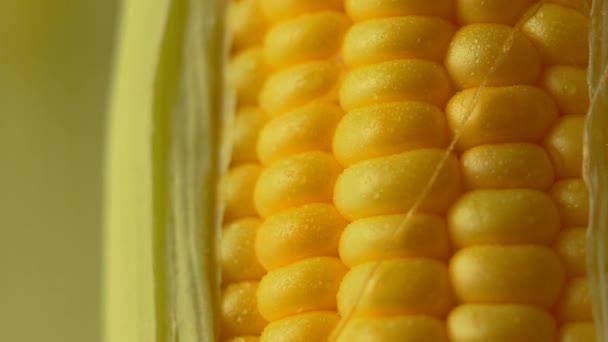 Water drop on Fresh ripe peeled sweet corn high vitamin food from nature