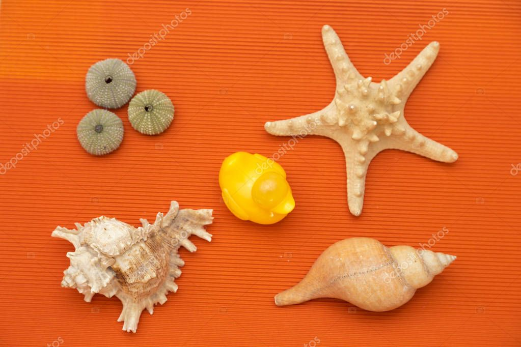 seashells and starfish with sea urchin shells, next to a yellow duckling, all on an orange background