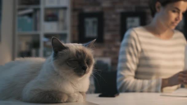 Süße Katze auf dem Tisch liegen und Frau liest Zeitschriften