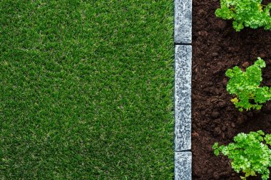 Plants growing on the garden humus soil and green lush grass, gardening and farming concept