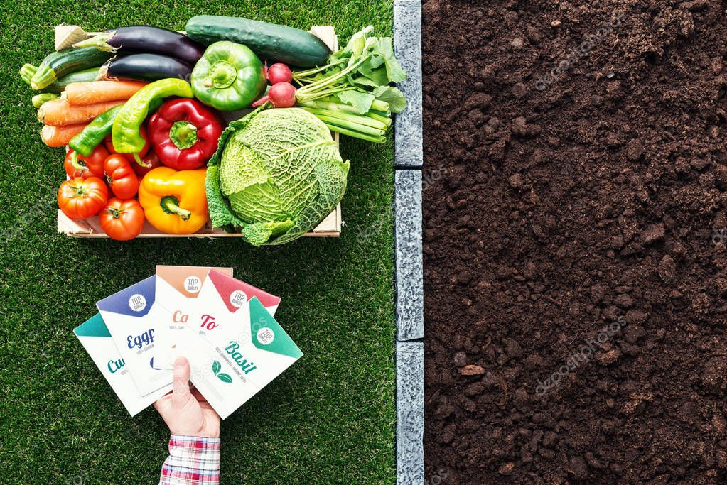 Farmer holding top quality vegetables seeds packets and wooden crate with freshly harvested vegetables, farming and gardening concept