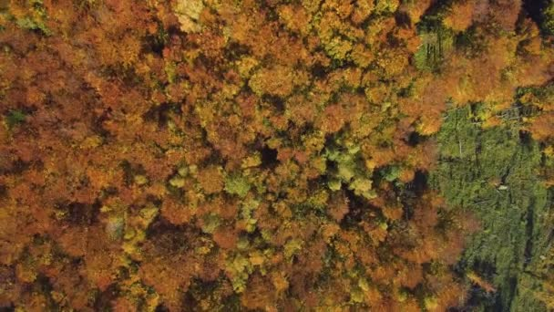 Aerial, top view from Drone: view of the forest crowns of trees from above.