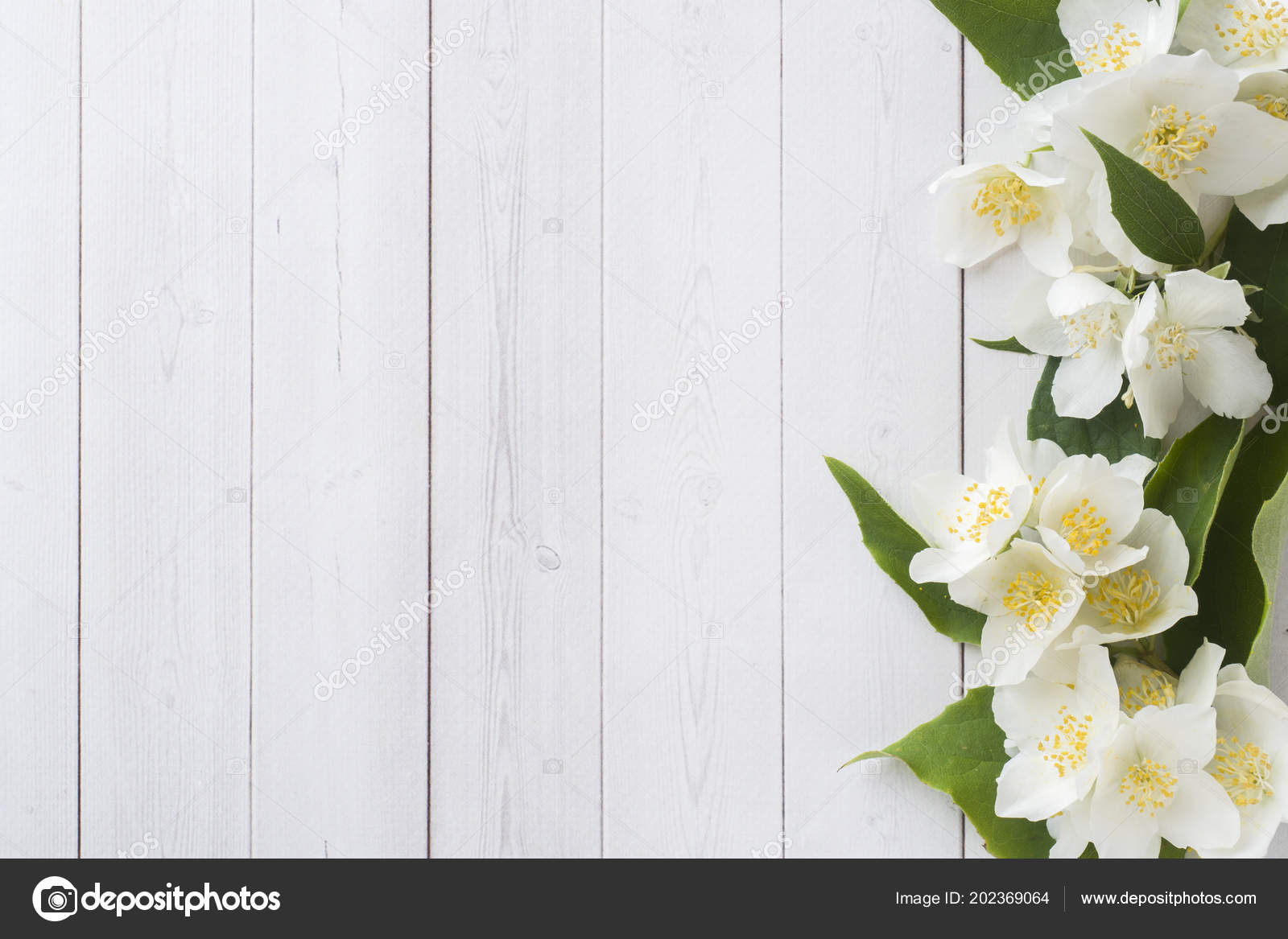 Jasmine Flowers Light Background Flower Frame Copy Space Text