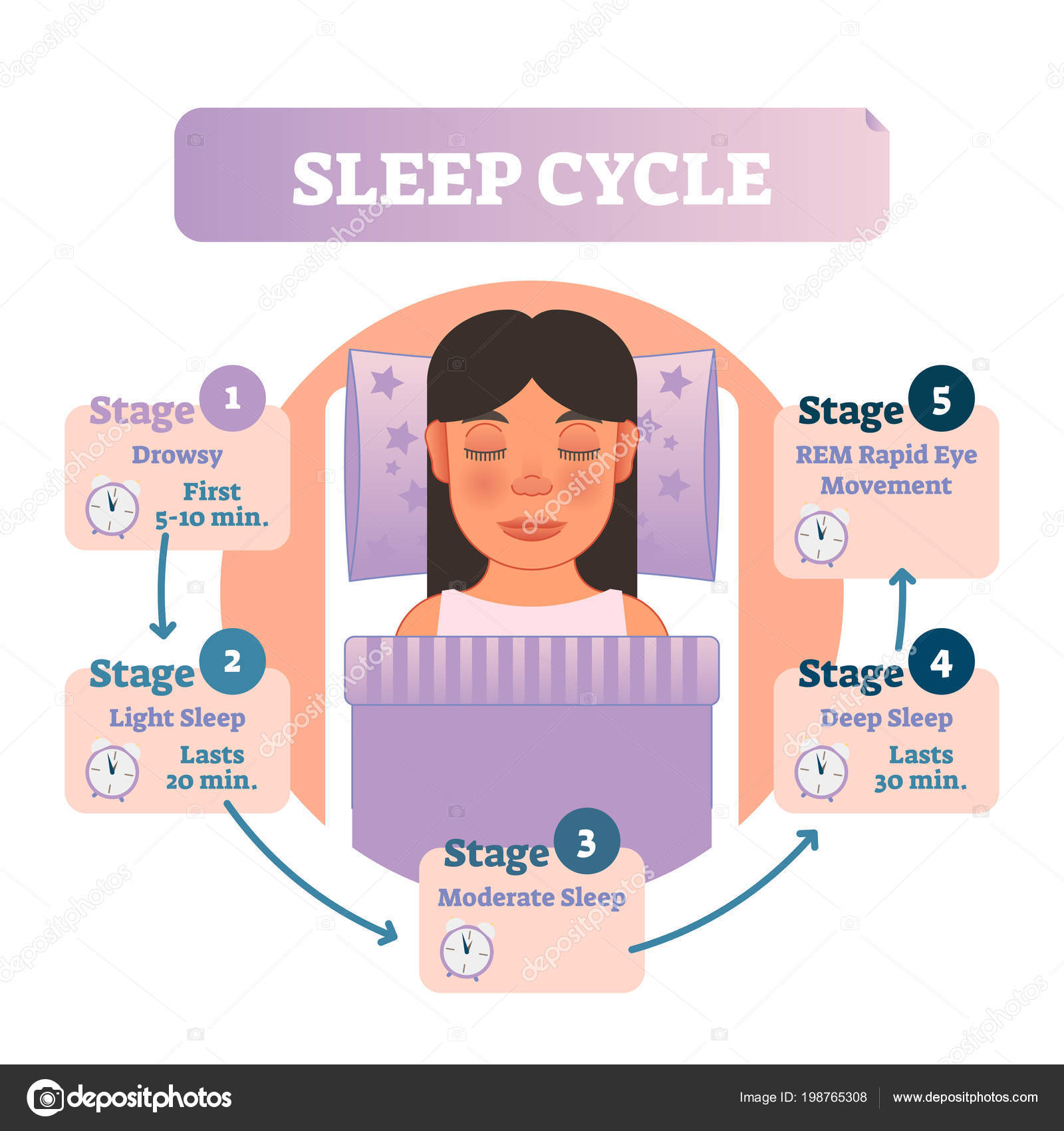 healthy human sleep cycle vector illustration diagram with female in bed  and sleep stages  educational