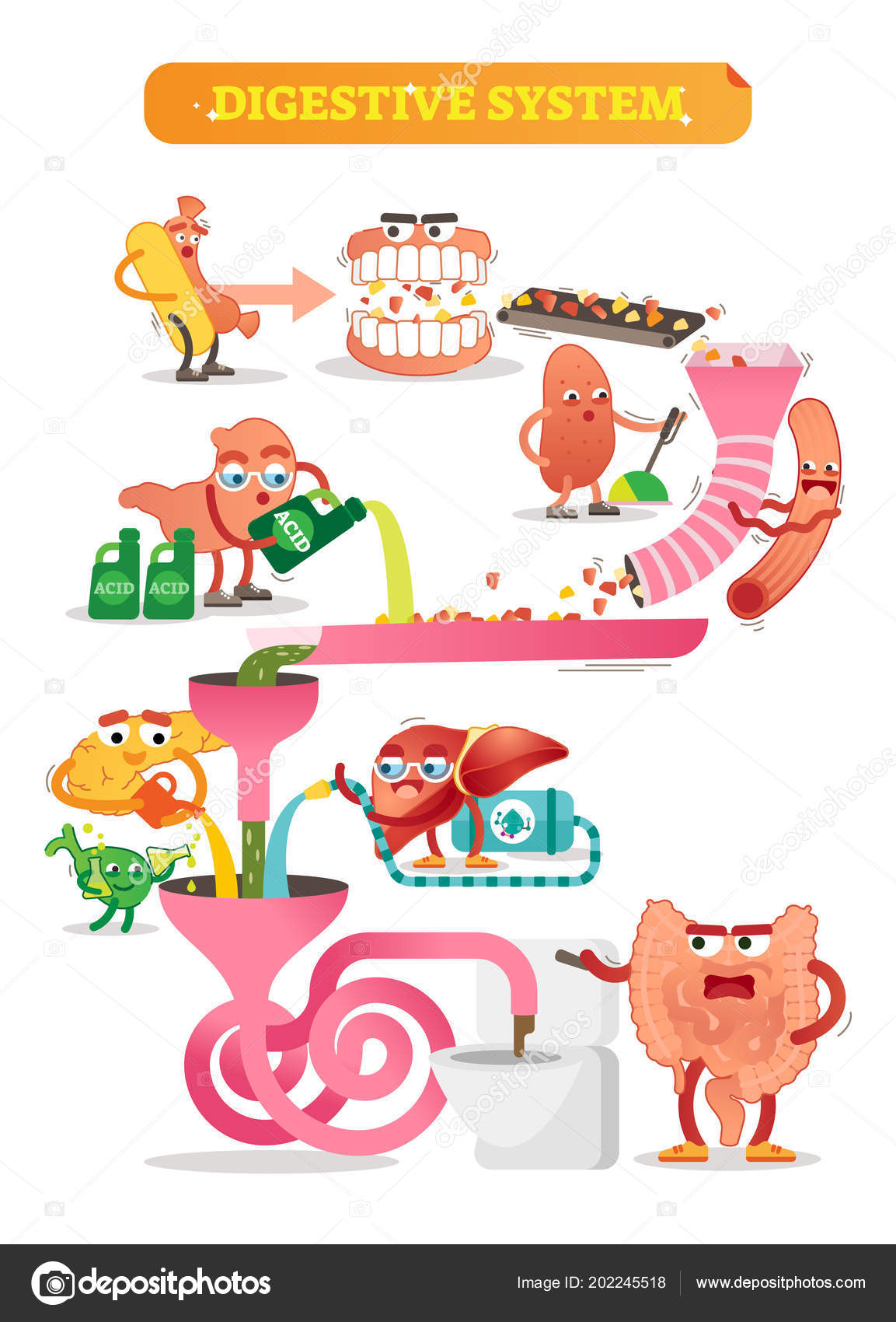 Digestive system vector illustration comic scheme with mouth gut comic scheme with personalizated and colorful mouth gut kidney pancreas bladder and liver diagram with ascending transverse descending and sigmoid ccuart Images