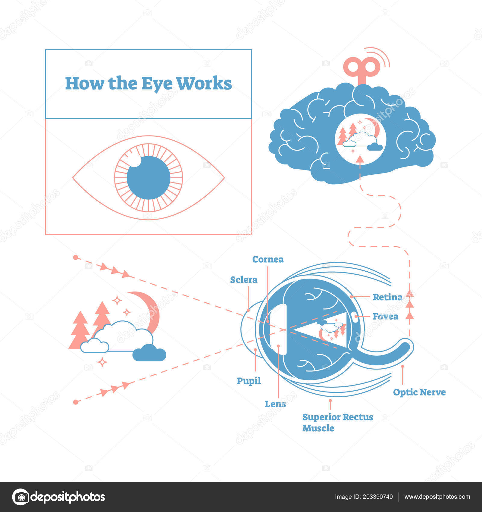 How the eye works medical scheme poster elegant and minimal vector how the eye works medical scheme poster elegant and minimal vector illustration eye brain labeled structure diagram stylized and artistic medical ccuart Images