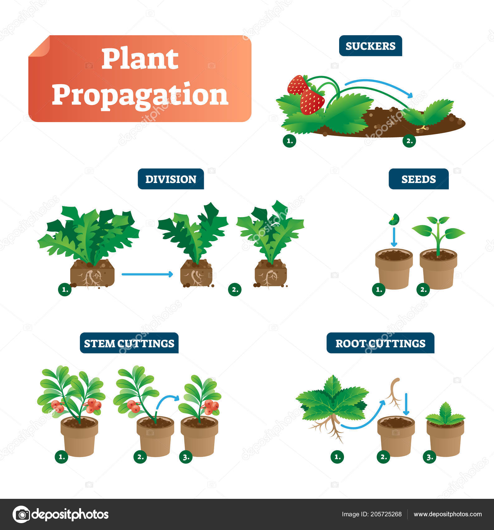 Plant propagation vector illustration diagram scheme with labels on plant propagation vector illustration diagram scheme with labels on suckers division seeds ccuart Image collections