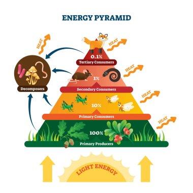 Energy pyramid vector illustration. Labeled biomass representation graphic.