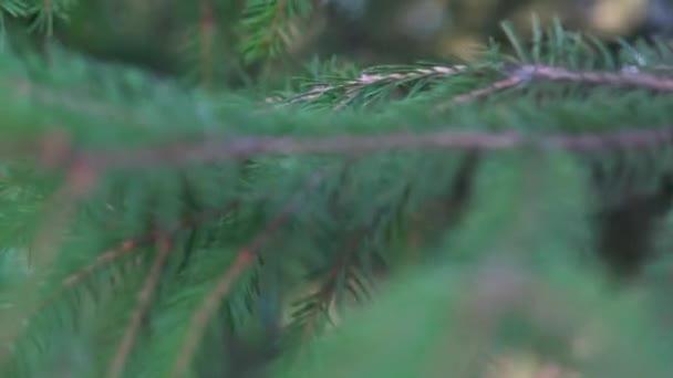 Kamera prochází větvemi stromů
