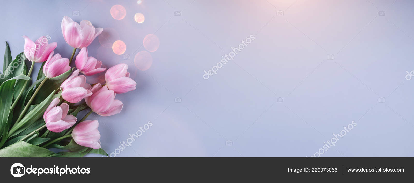 Bouquet Pink Tulips Flowers Light Blue Background Greeting