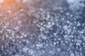 frostige Winterlandschaft im verschneiten Wald. Weihnachten Hintergrund mit Winterpflanze