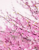 Kvetoucí strom nad přírodní pozadí. Krásné přírodní scéna s kvetoucí zahrada, slunce a sněhu. Velikonoční slunečný den. Jarní a letní květiny. Selektivní fokus