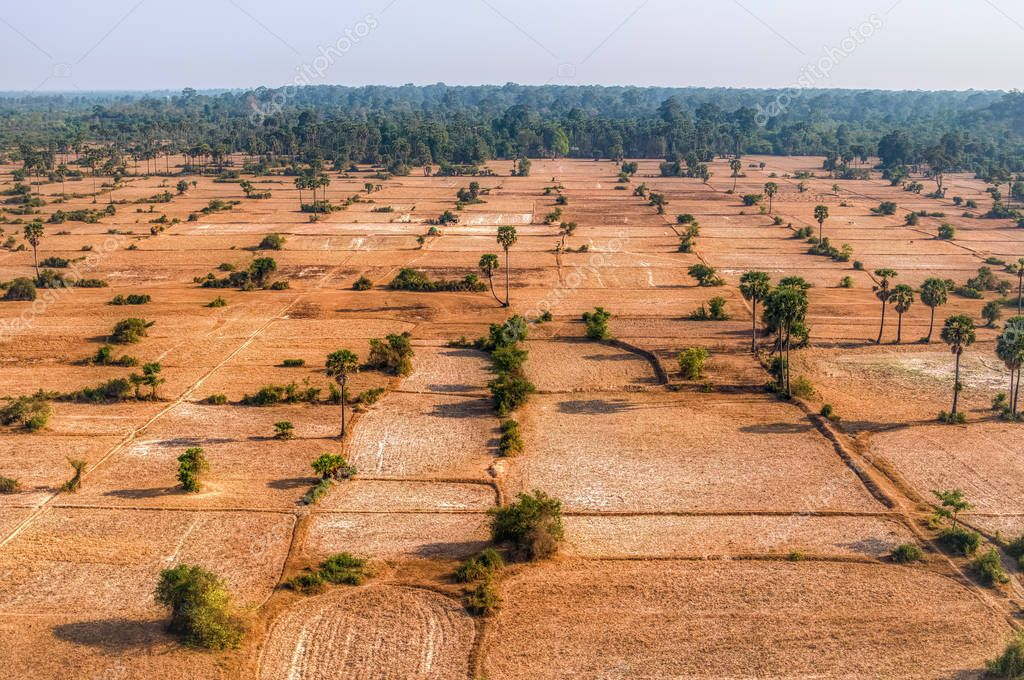 Cambodian fields from aerial view