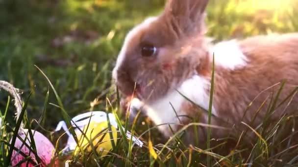 Fehér Húsvét nyuszi ül a fűben húsvéti tojás