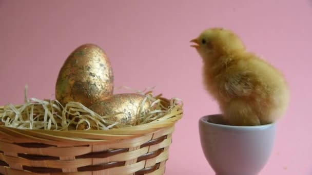 Yellow chick in eggcup with easter nest and easter eggs