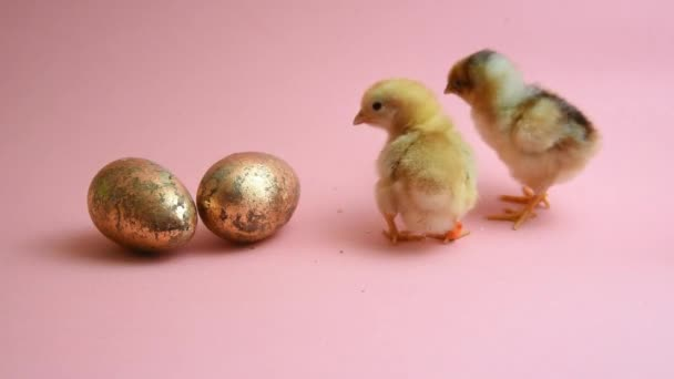 2 Húsvét csibék-val 2 arany-Húsvét ikra