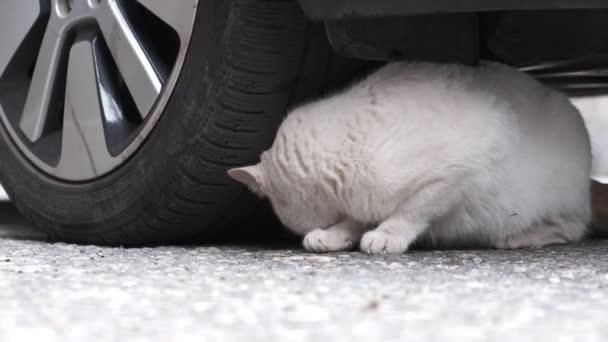 vadon macska dörzsölések ellen, amelynek célja az autó, a lassú mozgás video