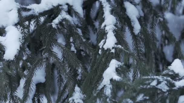 Zimní krajina s sníh pomalu padá a smrk pokryté sněhem