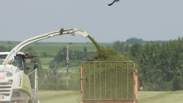Brand new combine harvester and truck as it empties herb in field on summers day