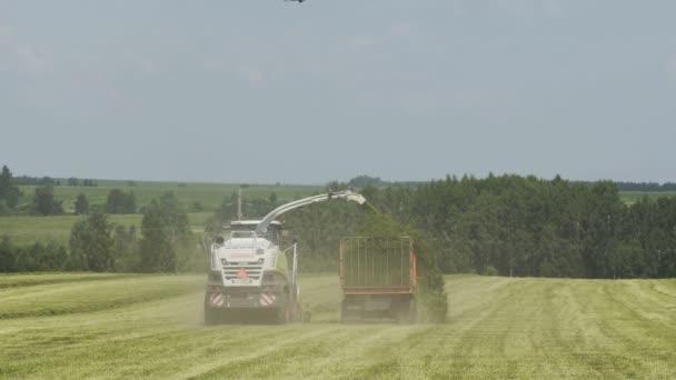 Sklízecí kombír převádějící čerstvě sklizenou bylinu na tahač k transportu