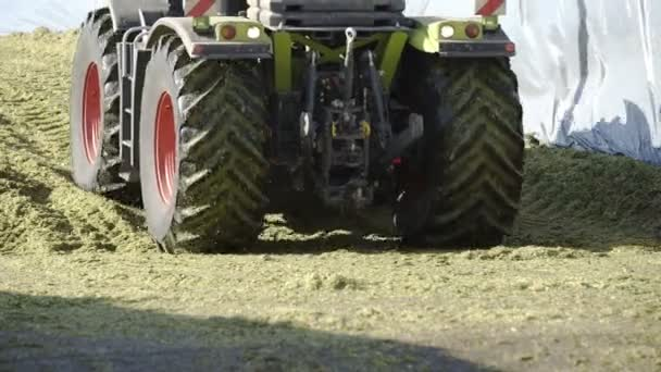 Tractor wheels crush freshly cut agricultural plant. Farmers harvest plant for animals