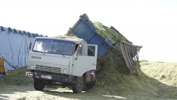 Truck transfering freshly harvested plant. Truck unloading agricultural plant.