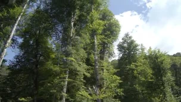 Letecký pohled z lesa na horském svahu