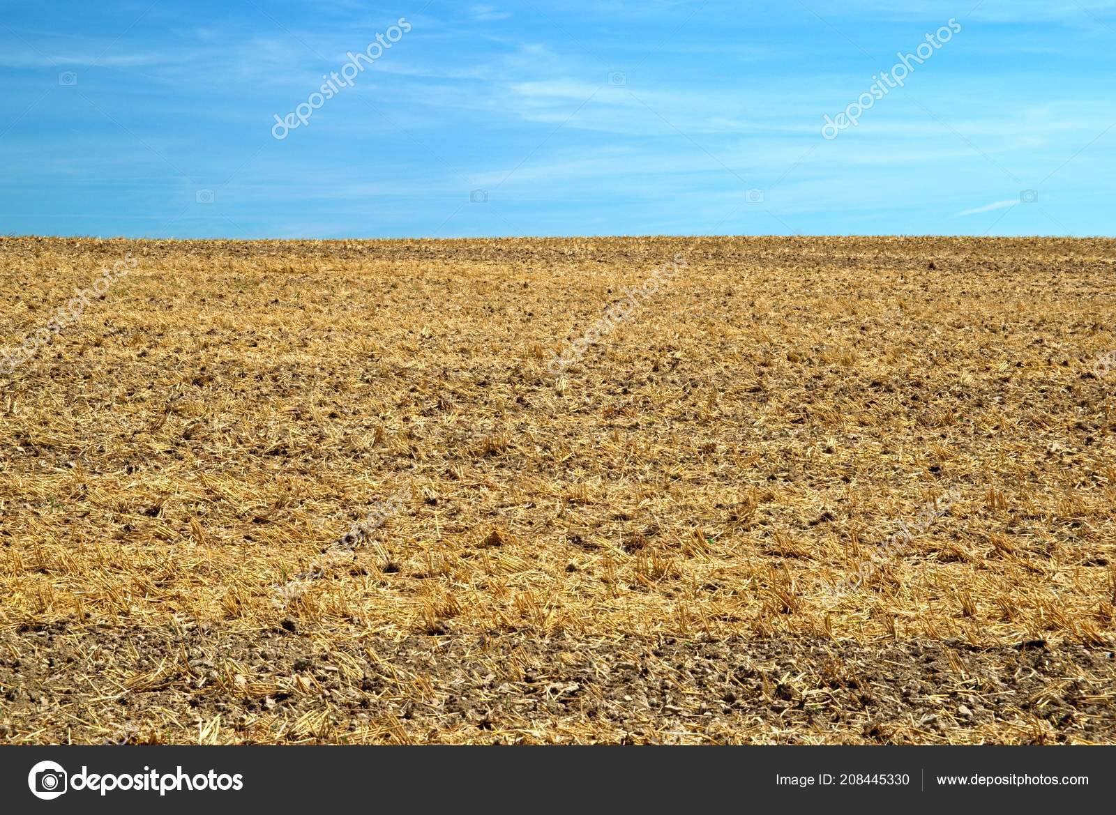 Field Stubble Harvest Blue Sky Stock Photo C Palickam