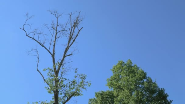 Symbolizace života a smrti s mrtvými a zelenými stromy na pozadí modré oblohy