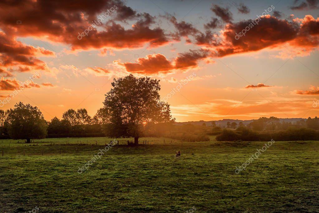 The landscape of the Hobbiton Movie Set and Farm, Matamata New Zealand