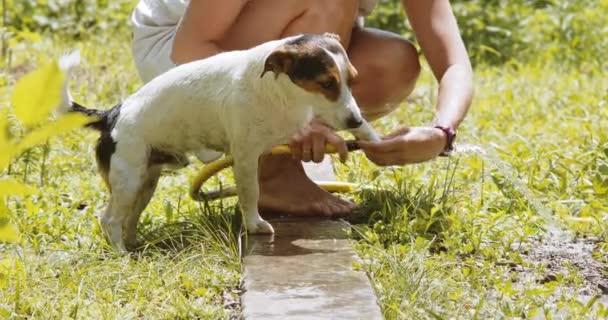 Woman wash dog in the garden.