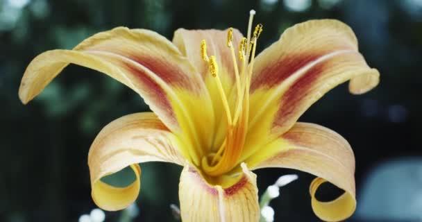 Makro žlutá oranžová květina