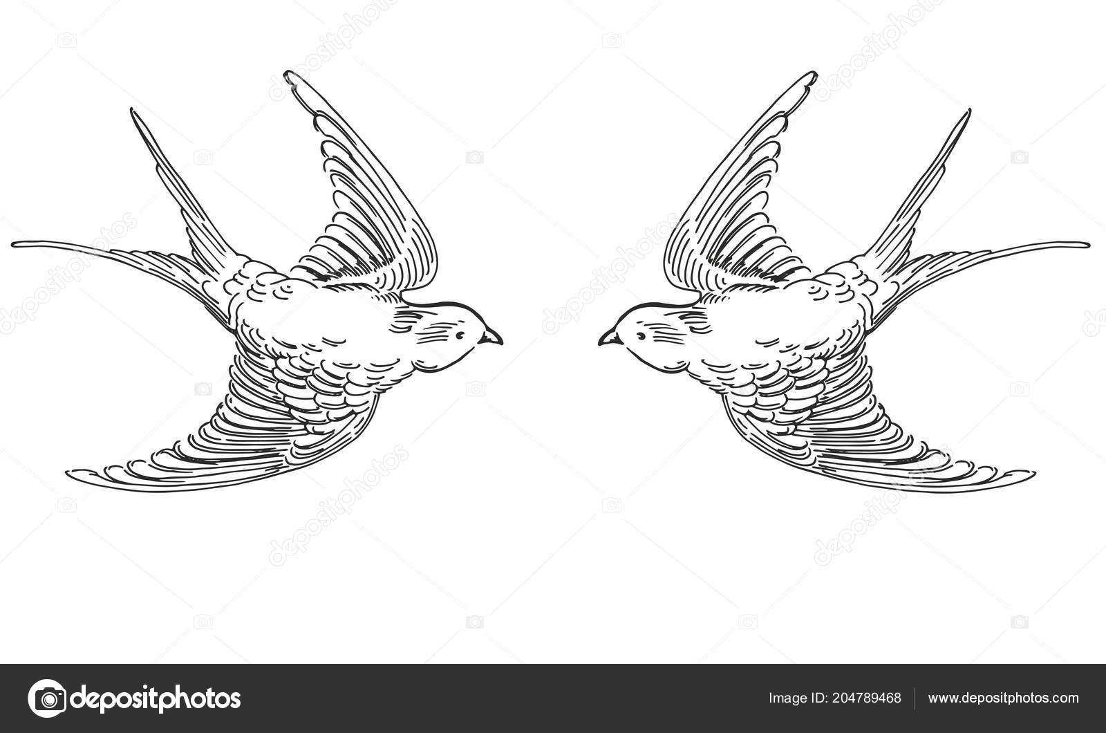 ilustração em vetor de mão desenhada esboço pássaros voando de