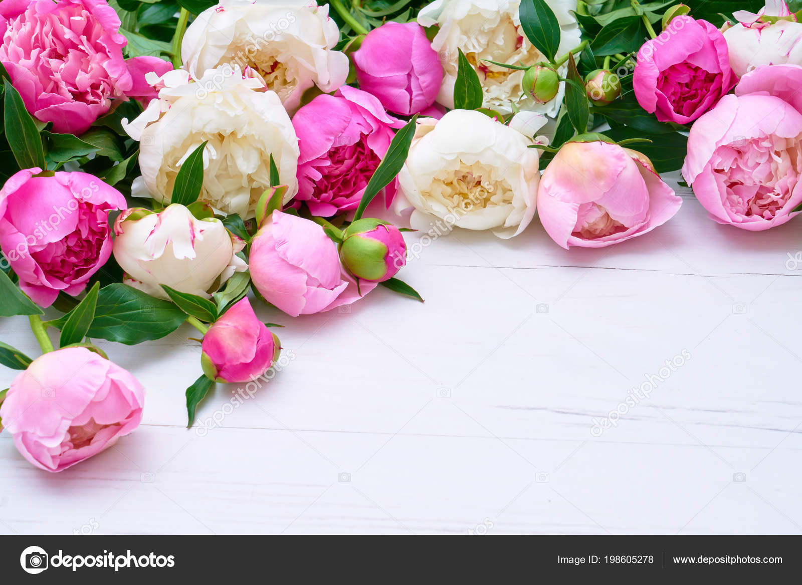 White Pink Peonies Bouquet White Wooden Background Holiday Background Copy Stock Photo C Laima Gri 198605278