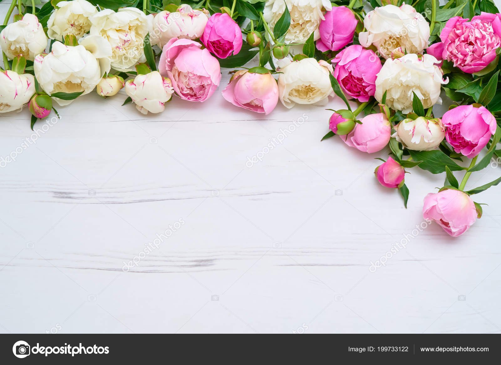 White Pink Peonies Bouquet White Wooden Background Holiday Background Copy Stock Photo Image By C Laima Gri 199733122