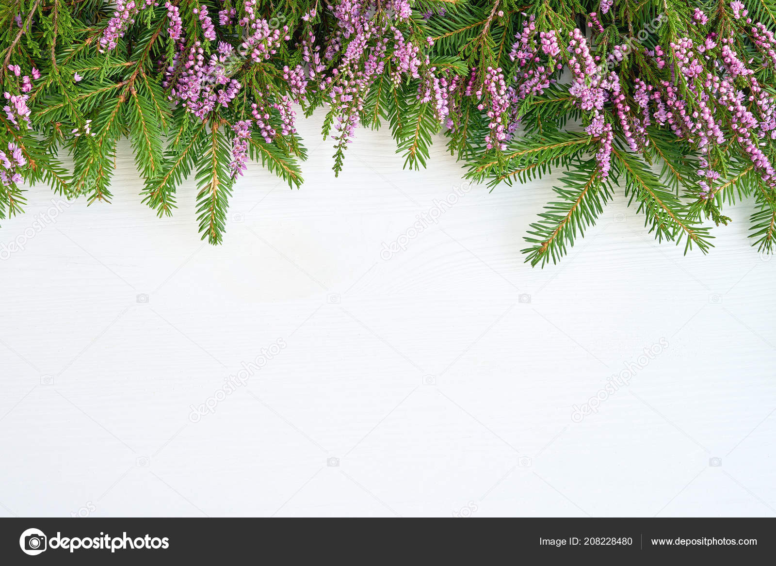 Christmas Background Fir Tree Branches Common Heather Flowers White