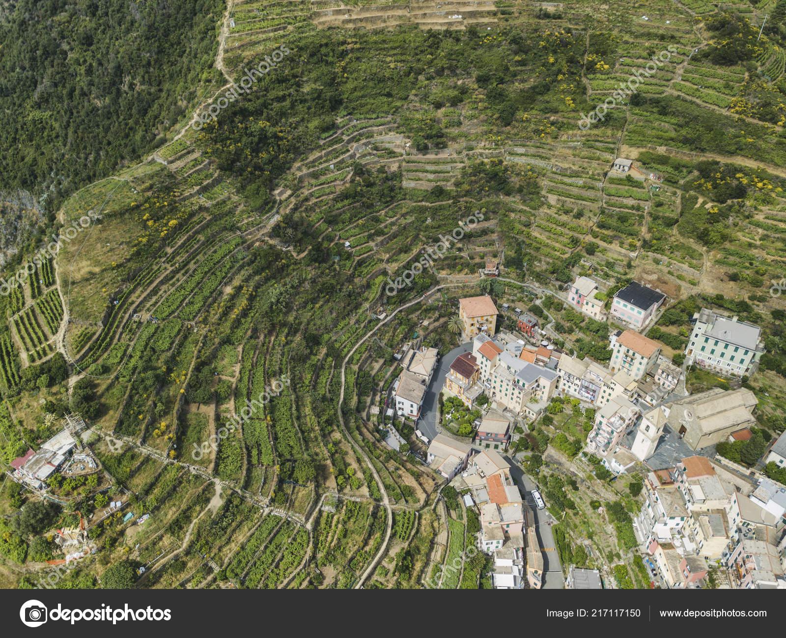 Terrazas Cultivo Alrededor Ciudad Manarola Cinca Terre