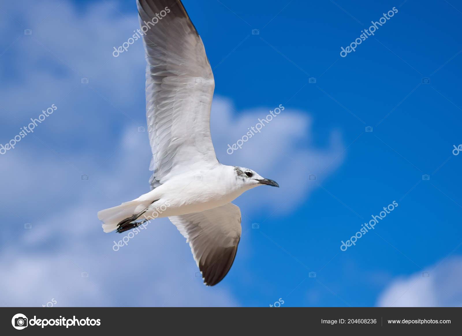 μεγάλο μακρύ λευκό πουλί Παίξτε Χεντάι σεξ παιχνίδι