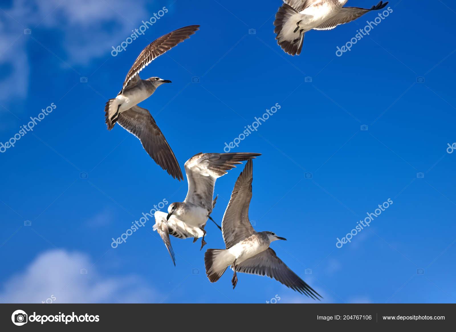 Μεγάλο μακρύ μαύρο πουλί εικόνες