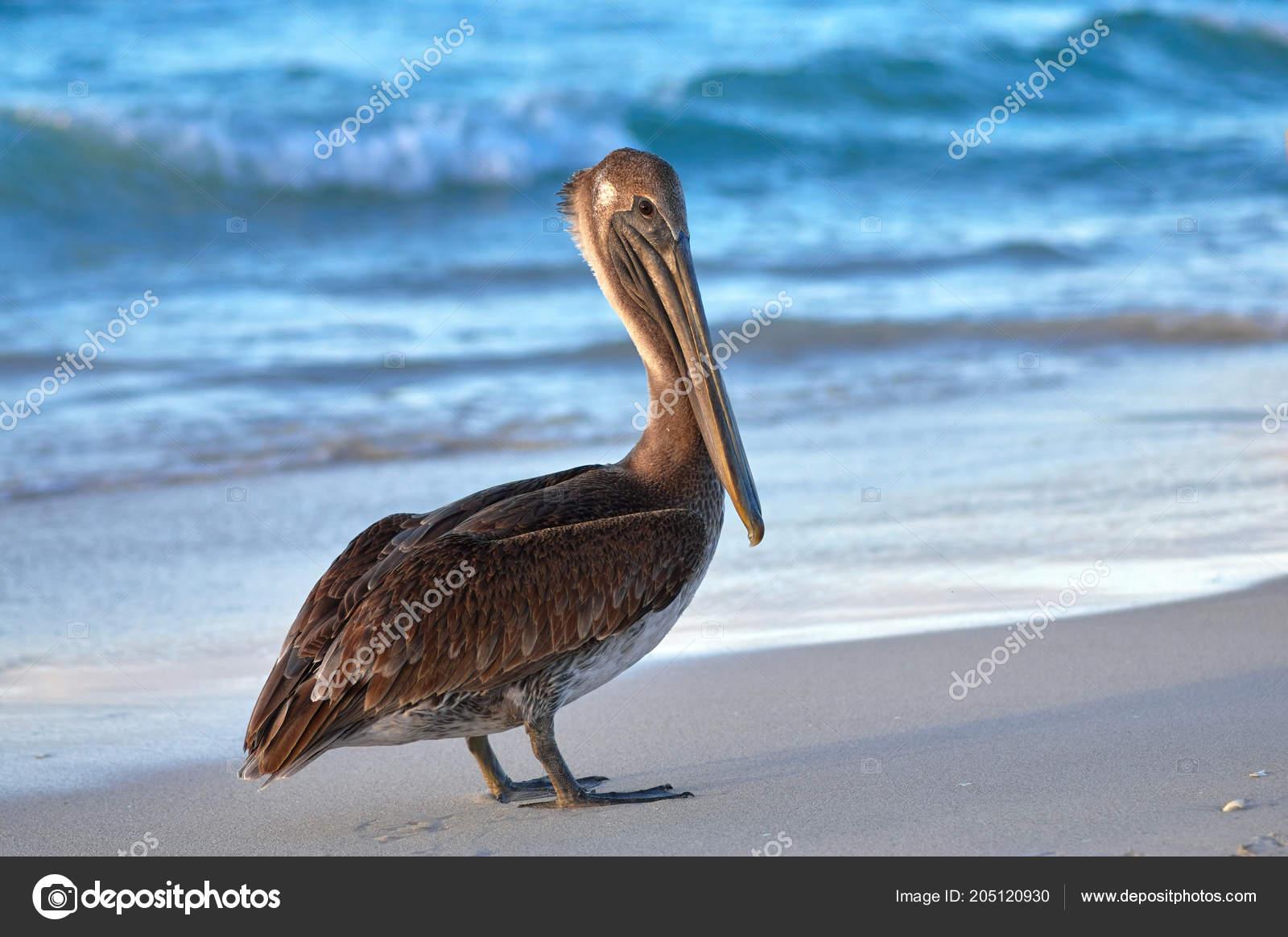 velký pták