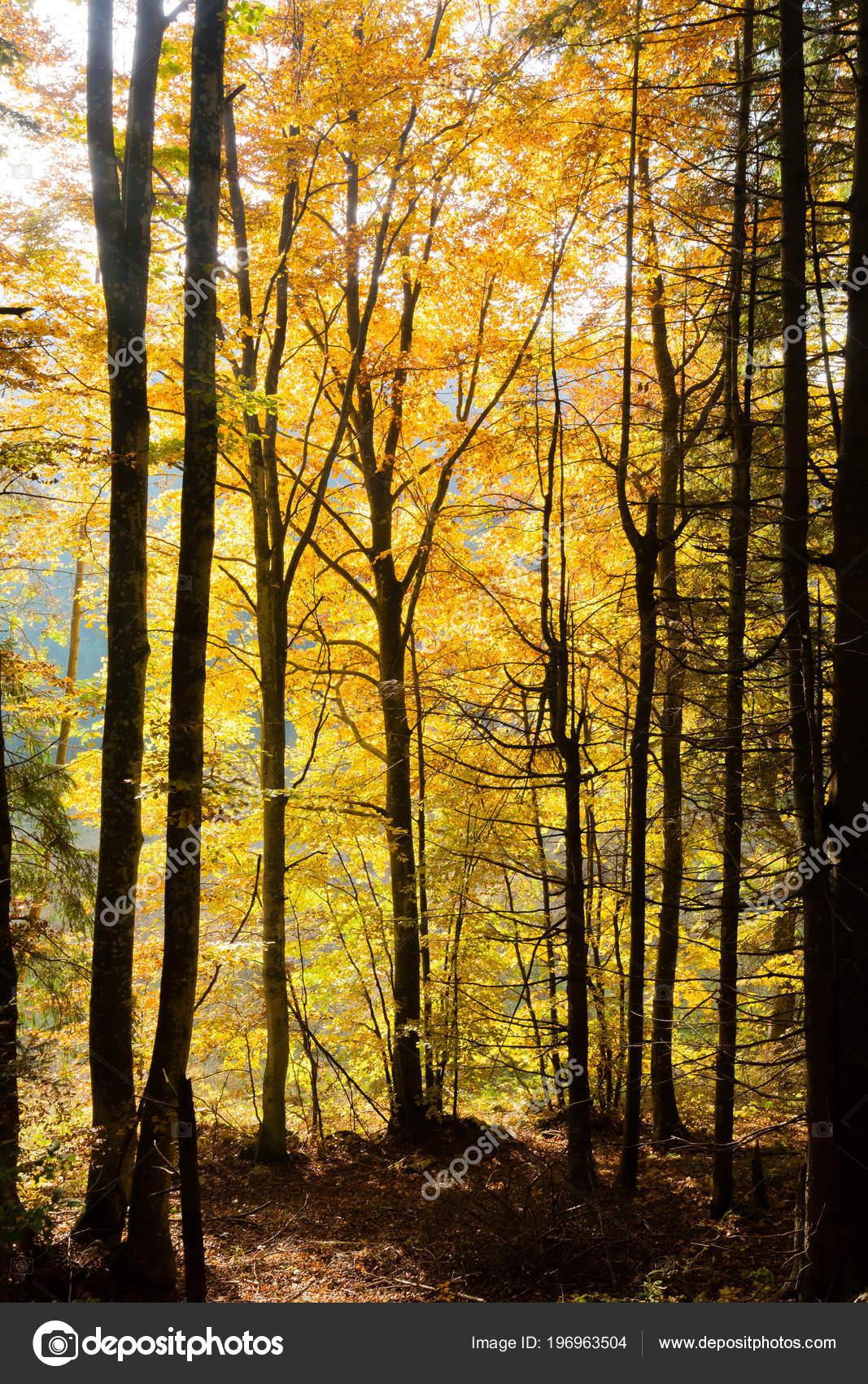 beauty of autumn season