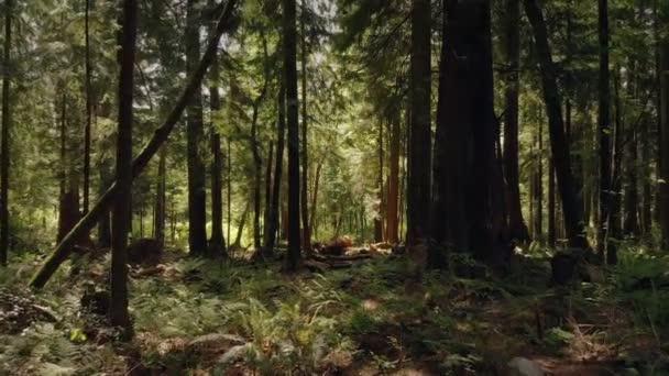 Bewegung durch schönen Sommerwald