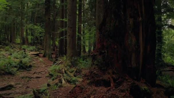 Přechod ze strany přes malebné lesní stezka