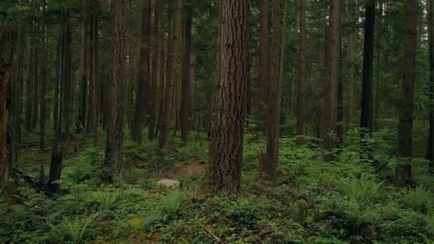 Stěhování do minulosti vysoká lesní stromy