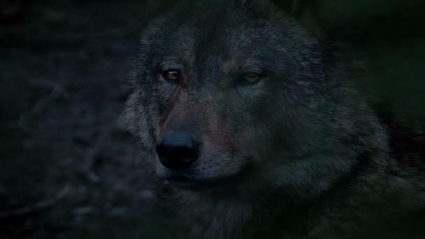 Este Wolf-hossz-szelvény nézet