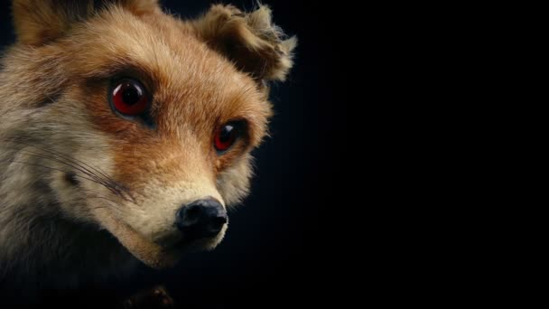 Red Fox Taxidermy Display