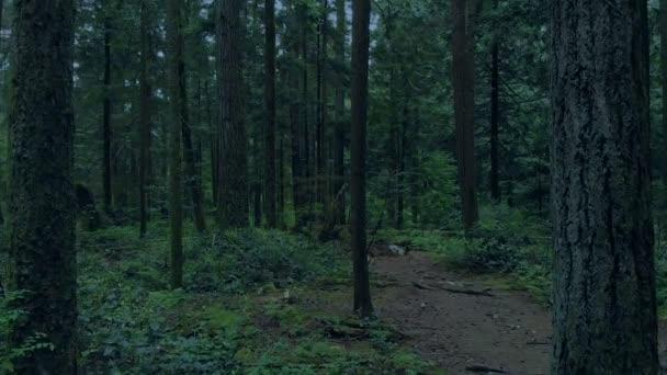 Předání po lesní stezce večer