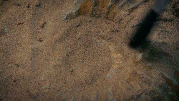 Prehistorický fosilních Sea Shell Ammonite ražena